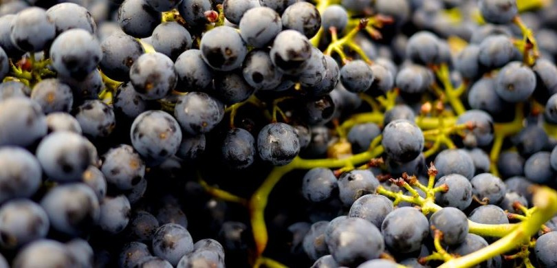 Natural Grape Wines is Most Exported Product from Georgia to Russia