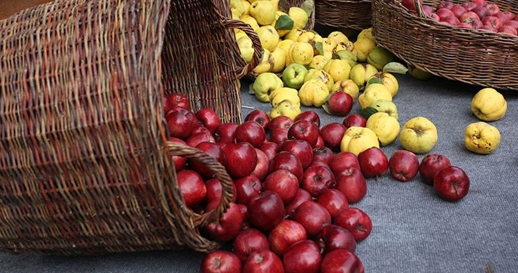 Export of Georgian Apples Increased Six Times Compared To 2019