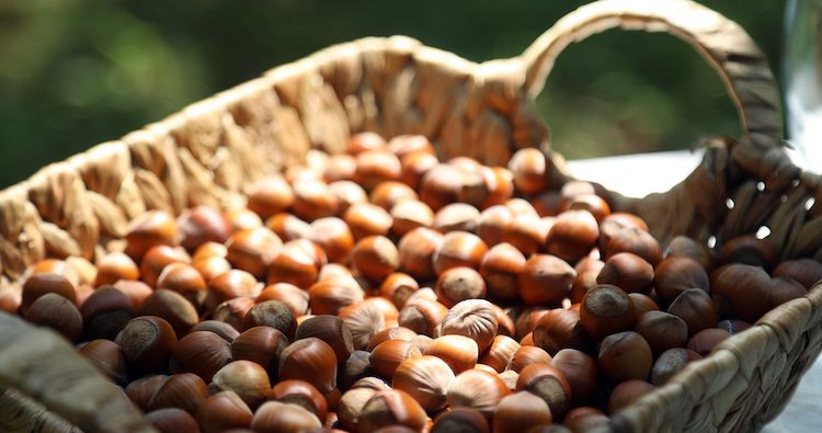 Georgian Hazelnuts Exports up 54% as of October 11